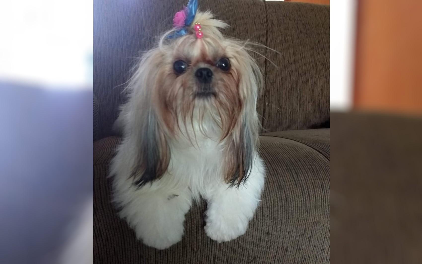 Casal denuncia que cachorrinha foi roubada na porta de casa, em Aparecida de Goiânia; vídeo