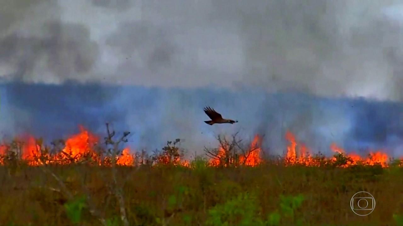 Por falta de recursos humanos e materiais, fauna no Pantanal é destruída pelo fogo