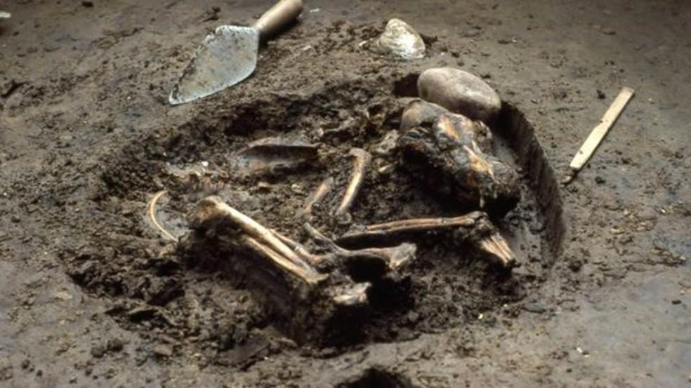 Alguns cientistas acreditam que lobos norte-americanos podem ter cruzado com cães ancestrais (Foto: Illinois State Archaeological Survey)