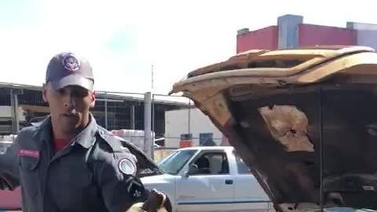 Jiboia é encontrada dentro de motor de caminhonete em Araguari
