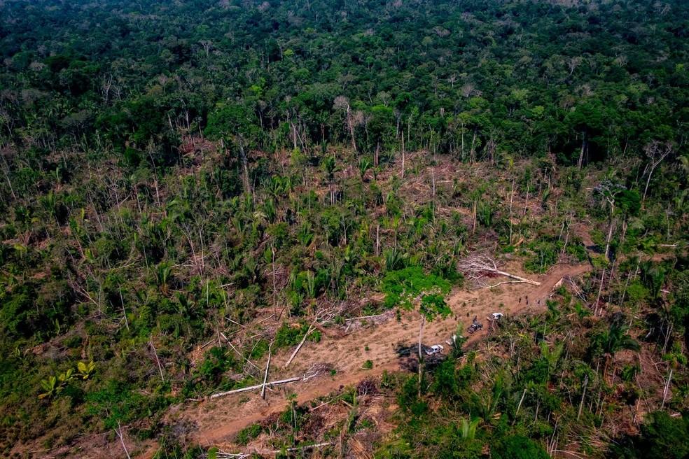 Colniza foi o município com maior área de floresta desmatada em Mato Grosso em 2019 — Foto: Marcos Vergueiro/SECOMMT