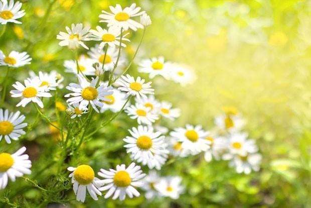 Plantas medicinais: 10 tipos que curam (Foto: Reprodução/Divulgação)