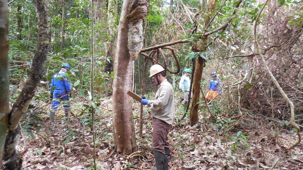 O engenheiro florestal Roberval Júnior acompanha o processo de reflorestamento das áreas — Foto: MRN/Divulgação