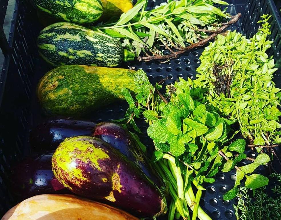 Usuário pode escolher legumes, verduras, frutas, ervas e temperos para serem cultivados (Foto: Arquivo Pessoal/Antoine Dubacq)