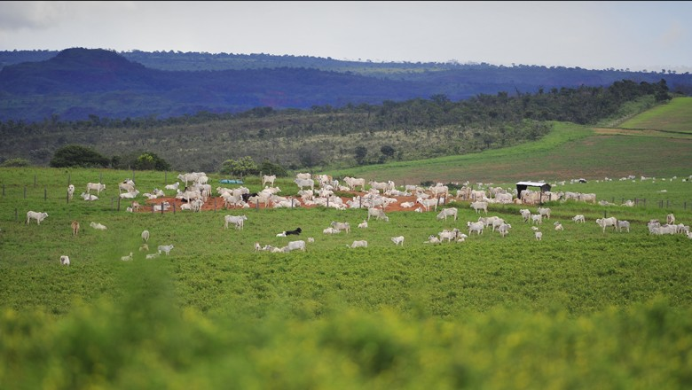 pecuaria-boi-nelore-corte-carne (Foto: Ernesto de Souza/Ed. Globo)