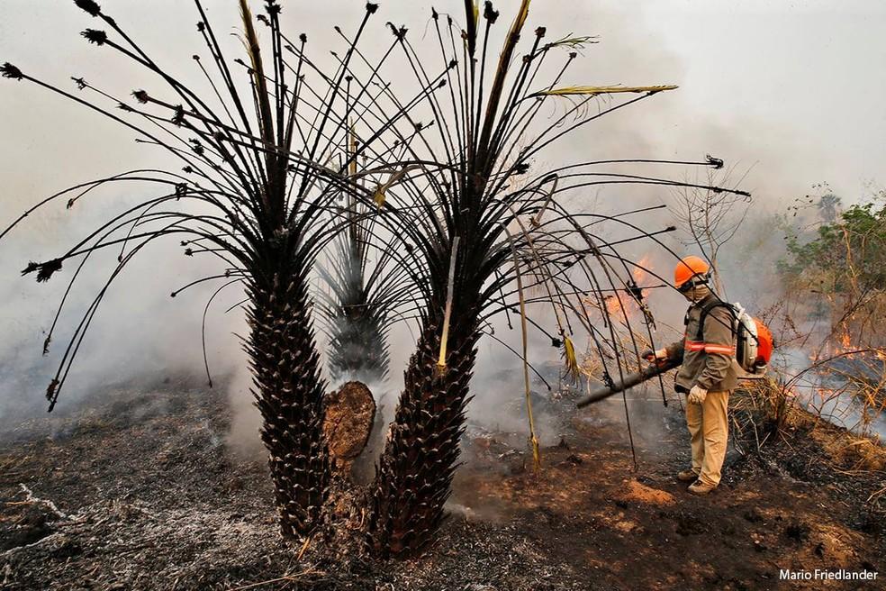 Ao todo 29% da área total do Pantanal foi atingida pelo incêndio — Foto: Mario Friedlander/ Acervo Pessoal