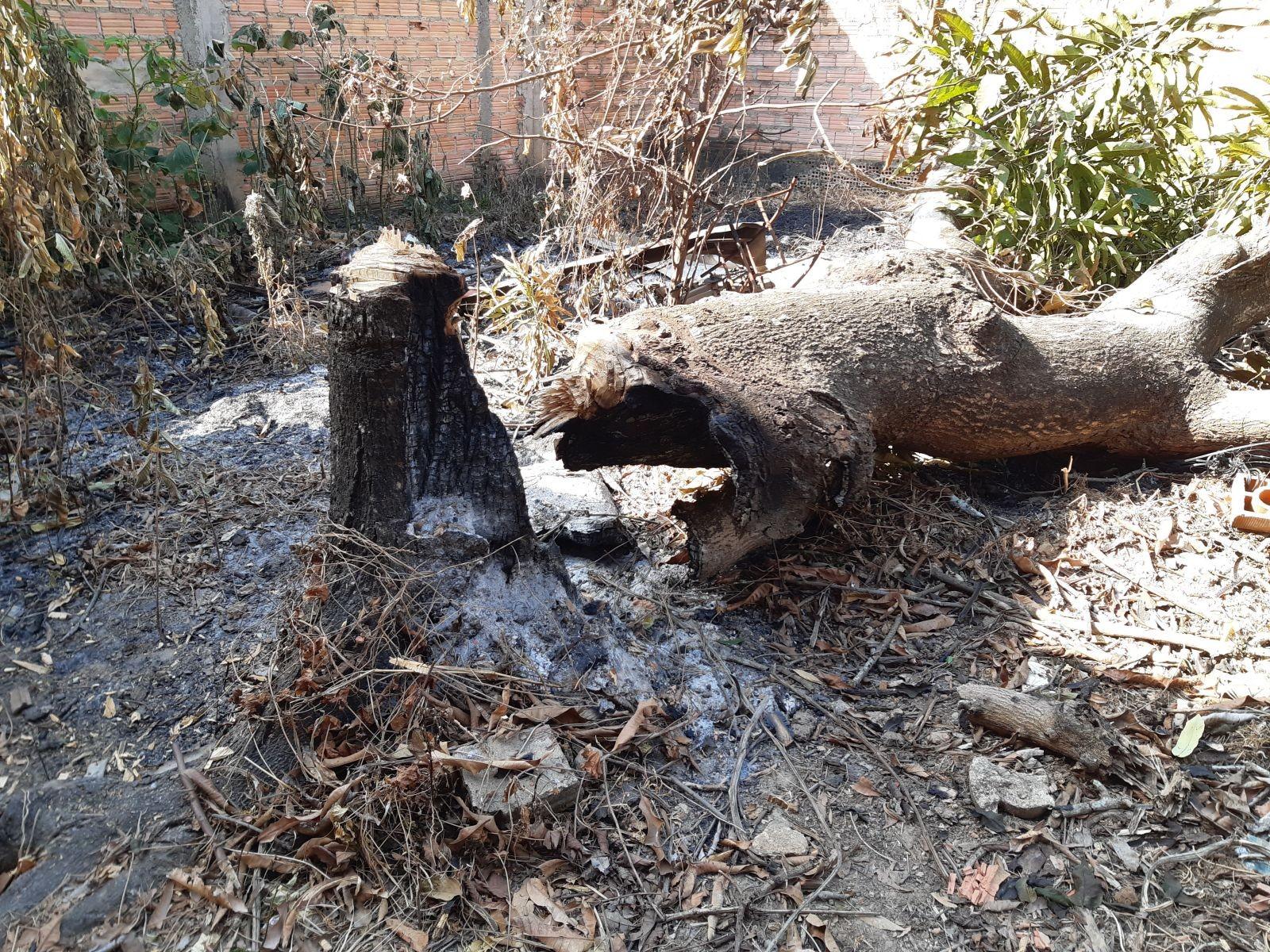 Porto Velho registra 25 focos de queimadas urbanas em dez dias; veja como denunciar
