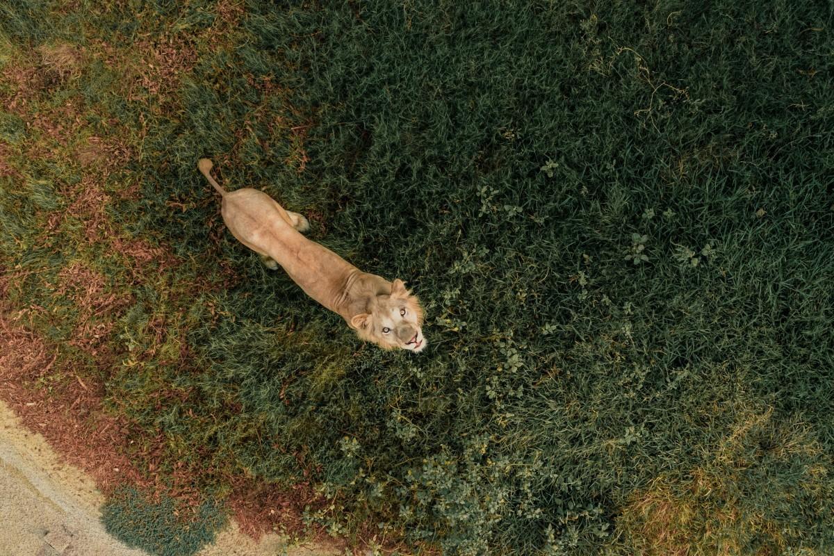 """""""Up Close & Personal"""", foto tirada por Bachirm (Foto: Reprodução/Dronestagram)"""