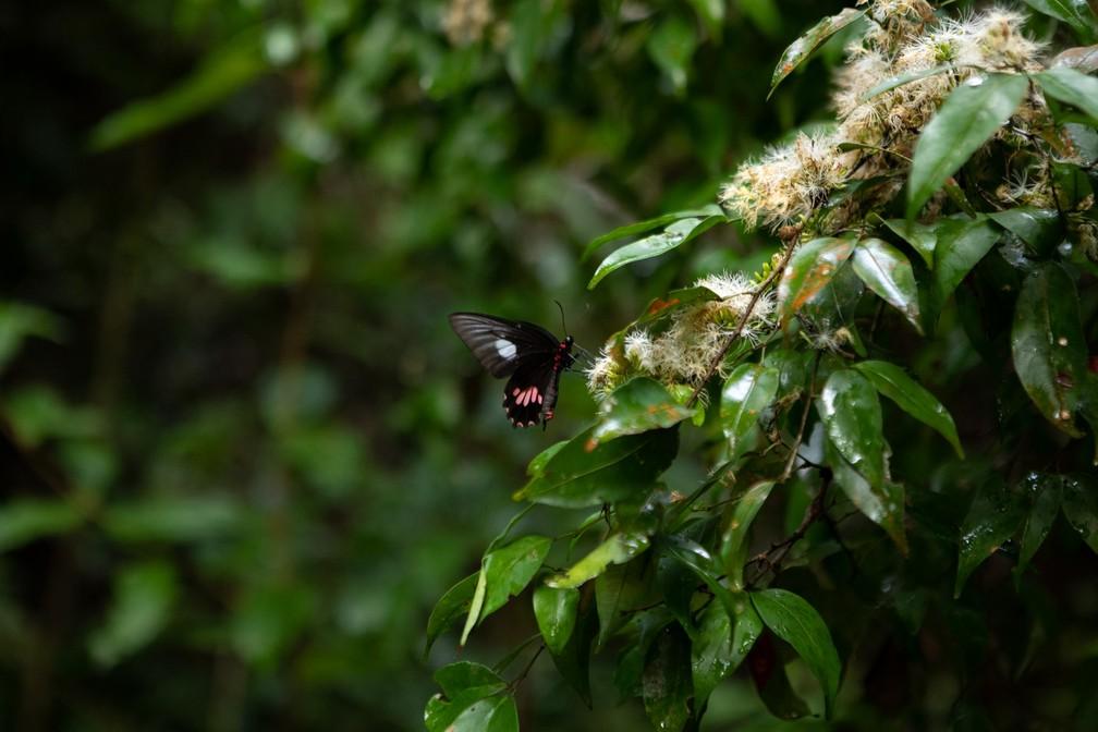 Uma borboleta é vista em parte da Floresta Nacional do Tapajós, próxima a Santarém (PA) — Foto: Marcelo Brandt/G1