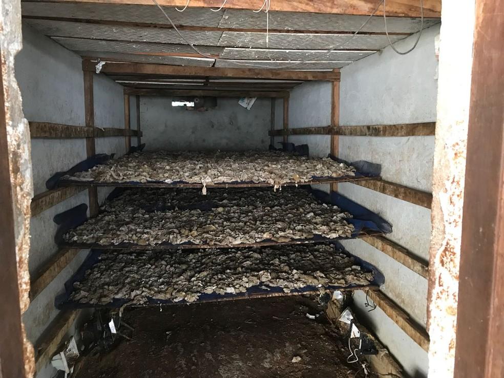Local da estufa onde as carnes eram colocadas em fábrica clandestina em Manaus (Foto: Divulgação/Polícia Civil)