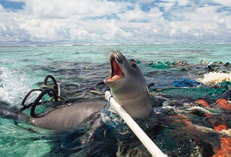 """Animais marinhos de todos os tamanhos são capturados pela 'pesca fantasma"""" (Foto: Proteção Animal Mundial)"""