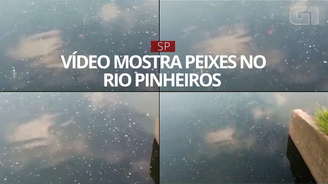 Vídeo mostra peixes no Rio Pinheiros