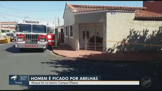 Três são atacados por abelhas e cruzamento é interditado na zona Norte de Ribeirão Preto
