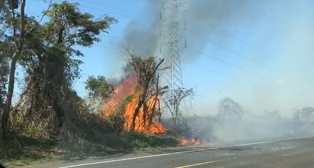 Fogo atingiu vegetação às margens da SP-284, entre Martinópolis e Rancharia, nesta terça-feira (1º) — Foto: Marcelo Pereira/TV Fronteira