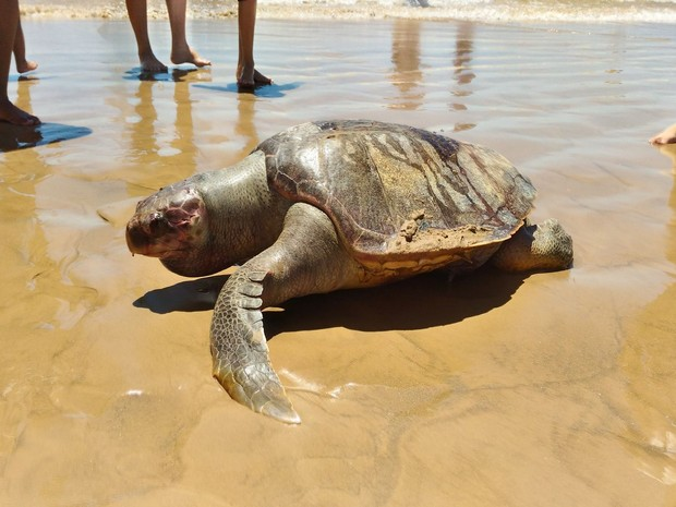 Banhista conta que o animal foi encontrado no início da manhã de domingo (29) (Foto: Érica Barbosa)