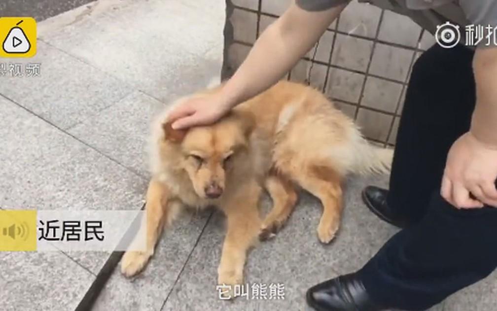 Xiongxiong esperava do lado de fora de uma estação de metrô pelo retorno de seu dono do trabalho — Foto: Pear Video