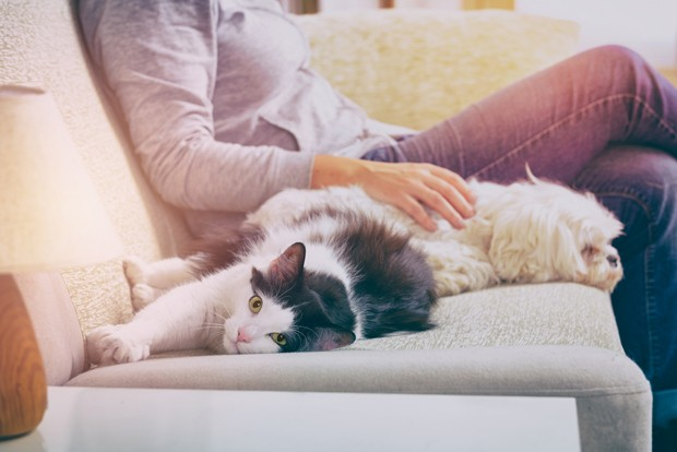 Woman sitting on sofa in living room with her pets little dog and cat (Foto: Getty Images/iStockphoto)