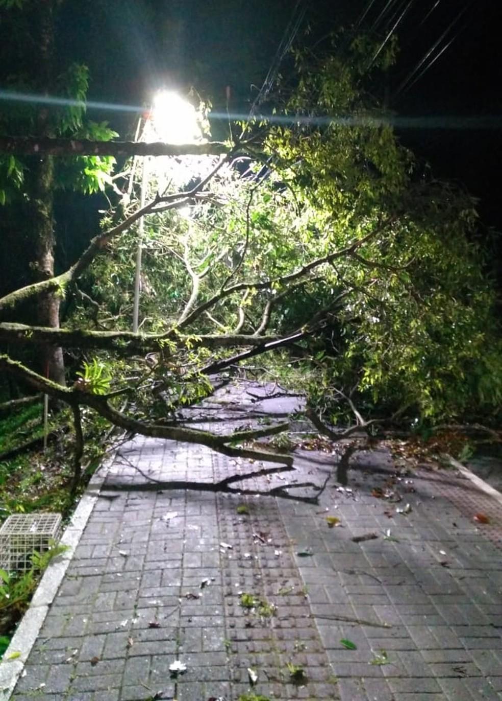 Foram registradas quedas de árvores em Jaraguá do Sul — Foto: Defesa Civil/ Divulgação