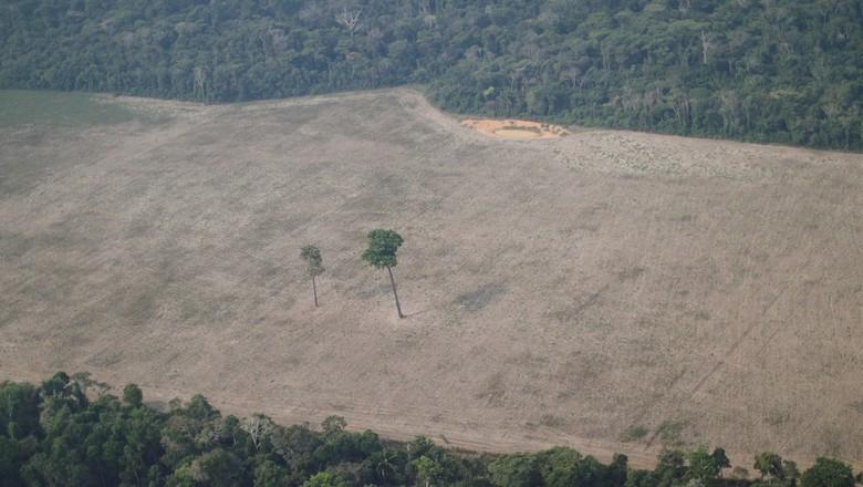 Vista aérea de área desmatada na floresta amazônica perto de Porto Velho 14/08/2020  (Foto: Ueslei Marcelino/Reuters)