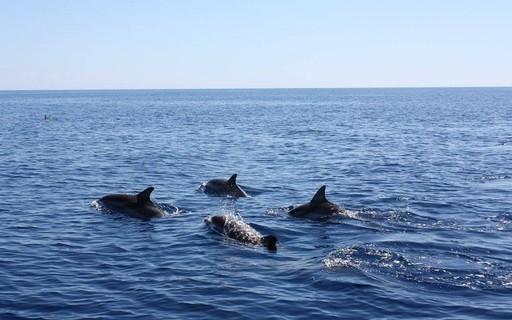 """Golfinhos machos """"cantam"""" em bando para proteger e atrair fêmeas"""