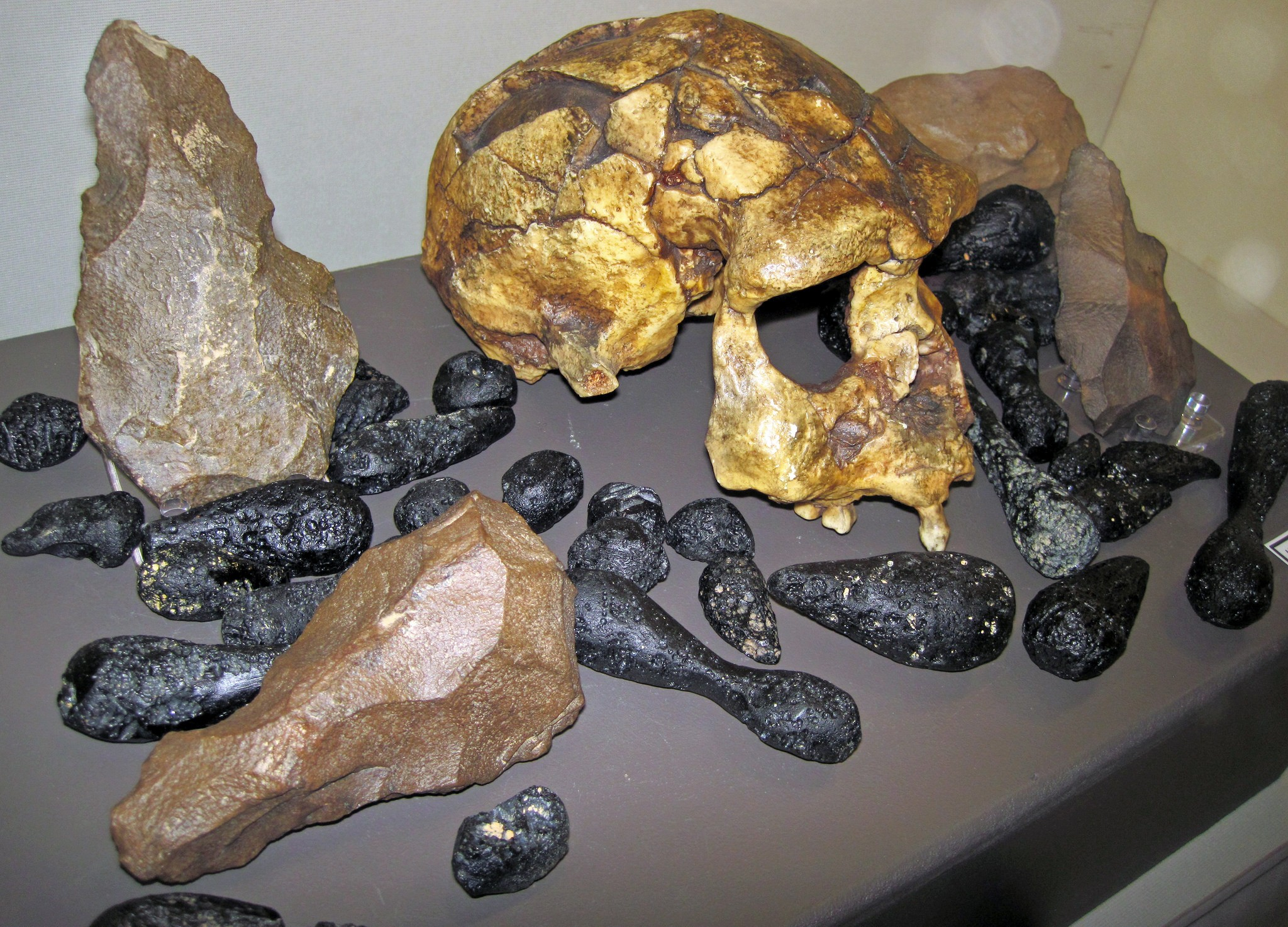 Crânio de Homo erectus (Foto: Flickr/ James St. John/Creative Commons)
