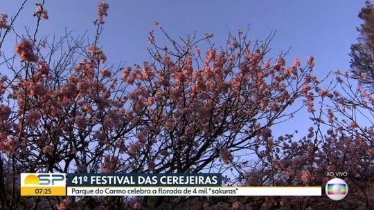Começa o 41º Festival das Cerejeiras