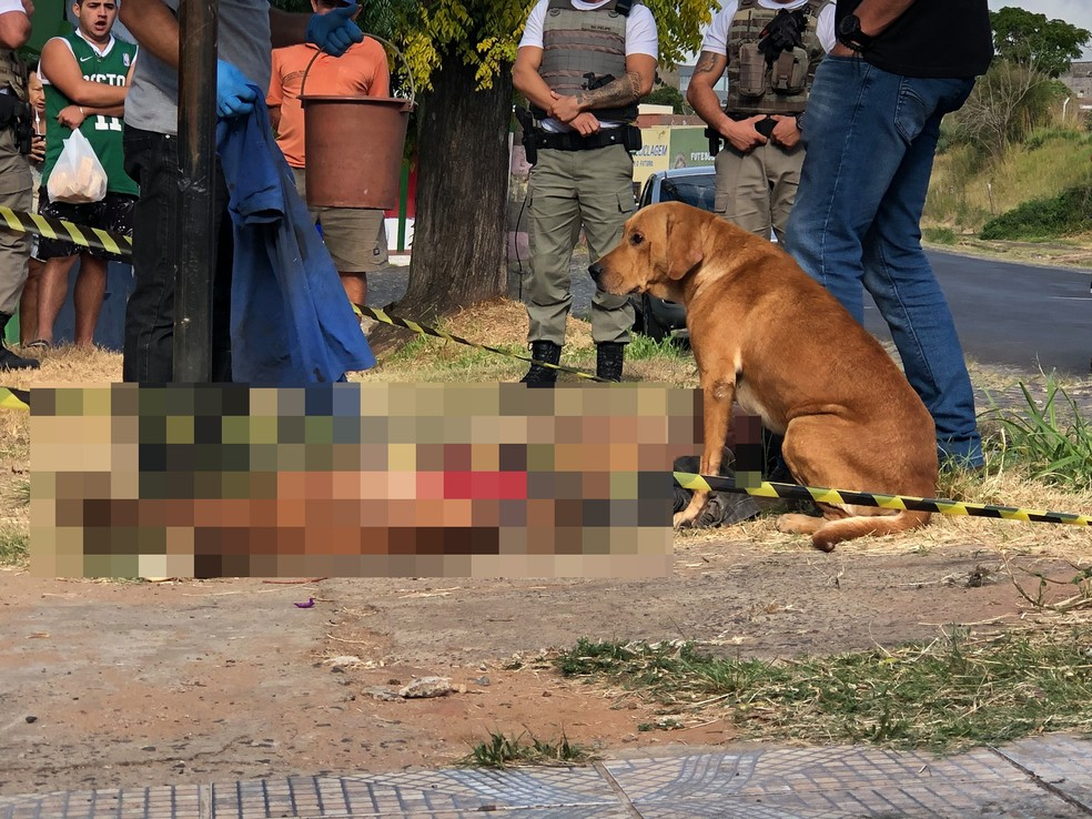 Cachorro fica ao lado de dono que foi morto em Santana do Livramento — Foto: Ralph Quevedo/Sentinela 24H