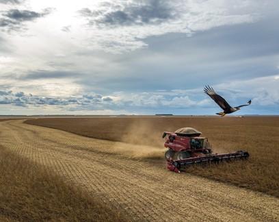 Ministério da Agricultura estima valor da produção acima de R$ 1 trilhão
