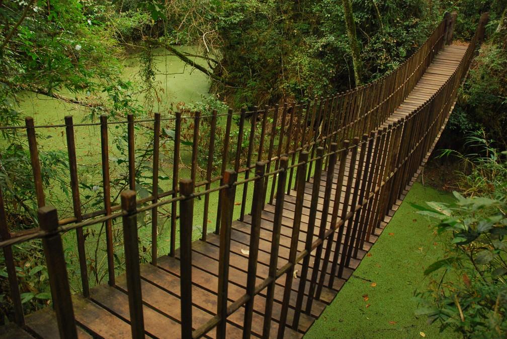 Parque Estadual Morro do Diabo, em Teodoro Sampaio — Foto: Fundação Florestal