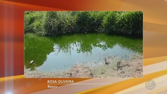'Lagoa de esgoto' incomoda moradores da Vila Carmem em Bauru