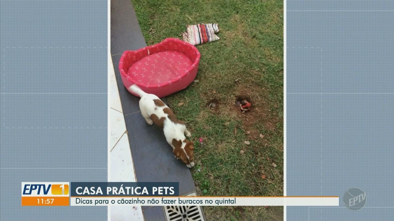 'Casa Prática Pets': confira dicas para seu cão não fazer buracos no quintal