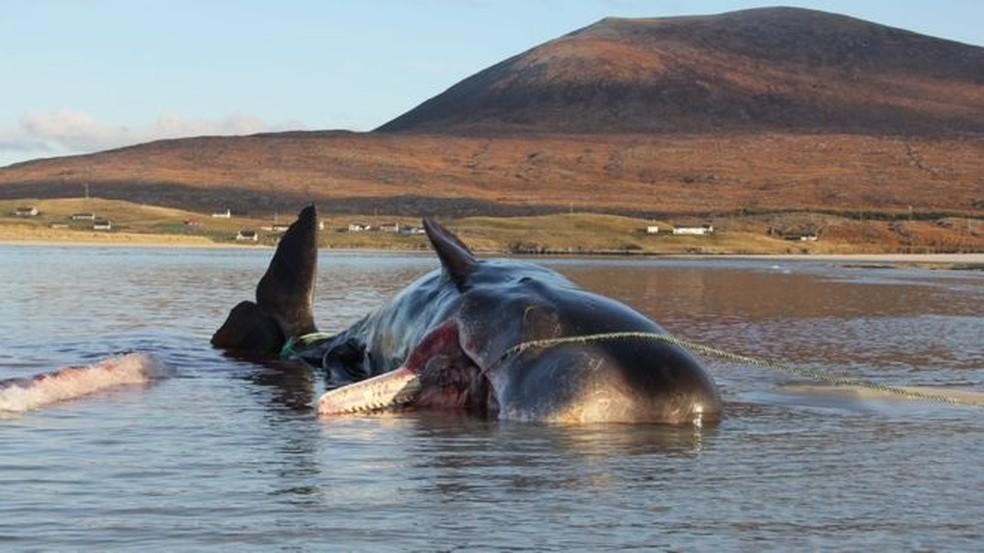 Redes de pesca e copos de plástico estavam entre os resíduos achados no estômago da baleia — Foto: Dan Parry