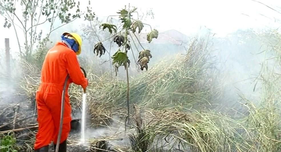 Brigadistas combatem ao fogo em Araguaína (Foto: Reprodução/TV Anhanguera)
