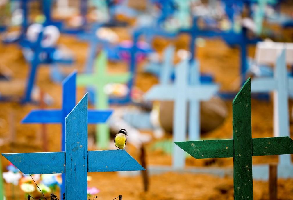 13 de maio - Pássaro é fotografado durante enterro no cemitério Parque Taruma, em Manaus — Foto: Bruno Kelly/Reuters