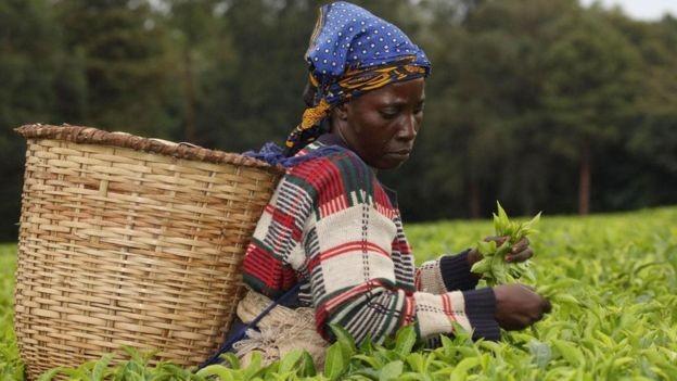 Comunidades locais no Quênia têm sistemas tradicionais de proteção ambiental (Foto: Alamy/ Via BBC)