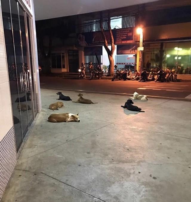 Os cachorros à espera do dono (Foto: Instagram)