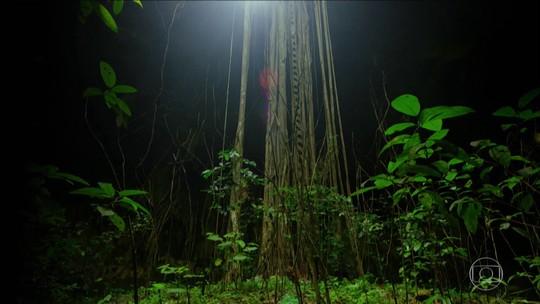 Rios subterrâneos mantêm a vida selvagem na Península de Iucatã, no México