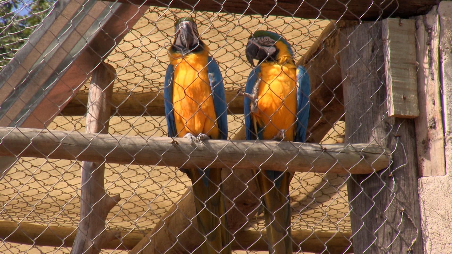 Casal transforma área em refúgio para animais silvestres em Lins
