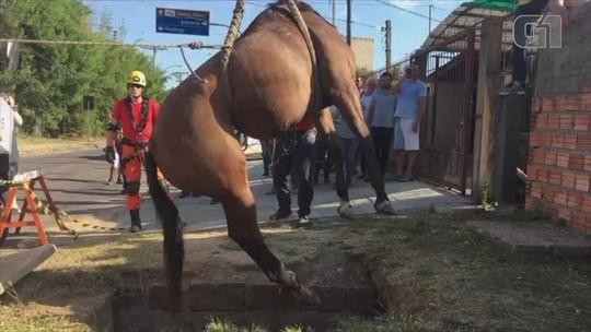 Égua é resgatada após cair em bueiro na Zona Sul de Porto Alegre; veja vídeo
