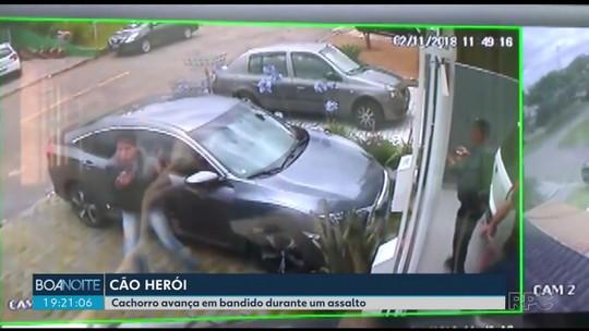 Cachorro reage contra assaltante armado e evita que donos sejam roubados em Curitiba: 'É um herói'