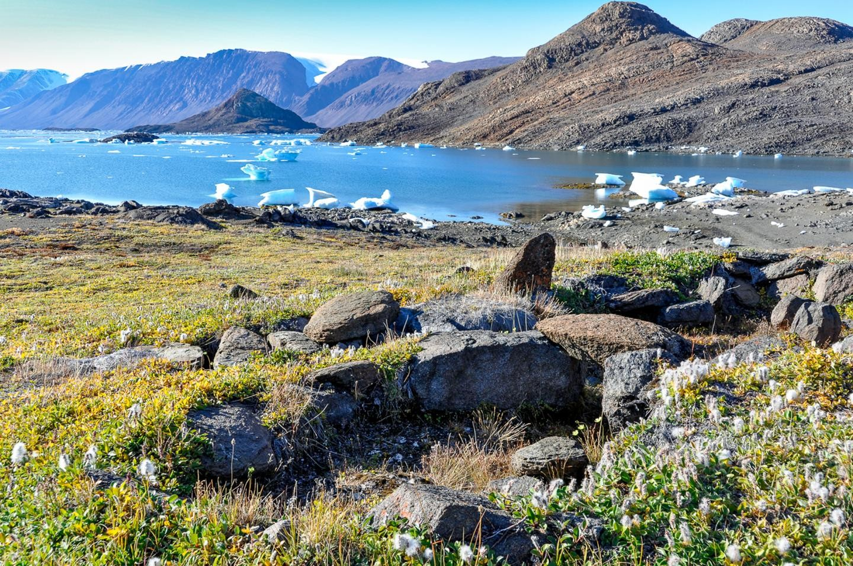 A altura das plantas que compões a tundra no Ártico aumentou nos últimos 30 anos.  (Foto: Anne Bjorkman)