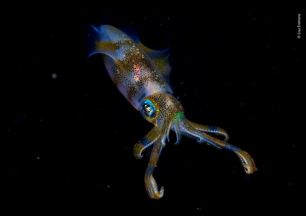 """Cruz Erdmann, que registrou na Indonésia a foto batizada de """"Brilho Noturno"""". Durante um mergulho noturno, ele flagrou as cores de uma lula de recife. — Foto: Cruz Erdmann/WPY 2019/Natural History Museum"""