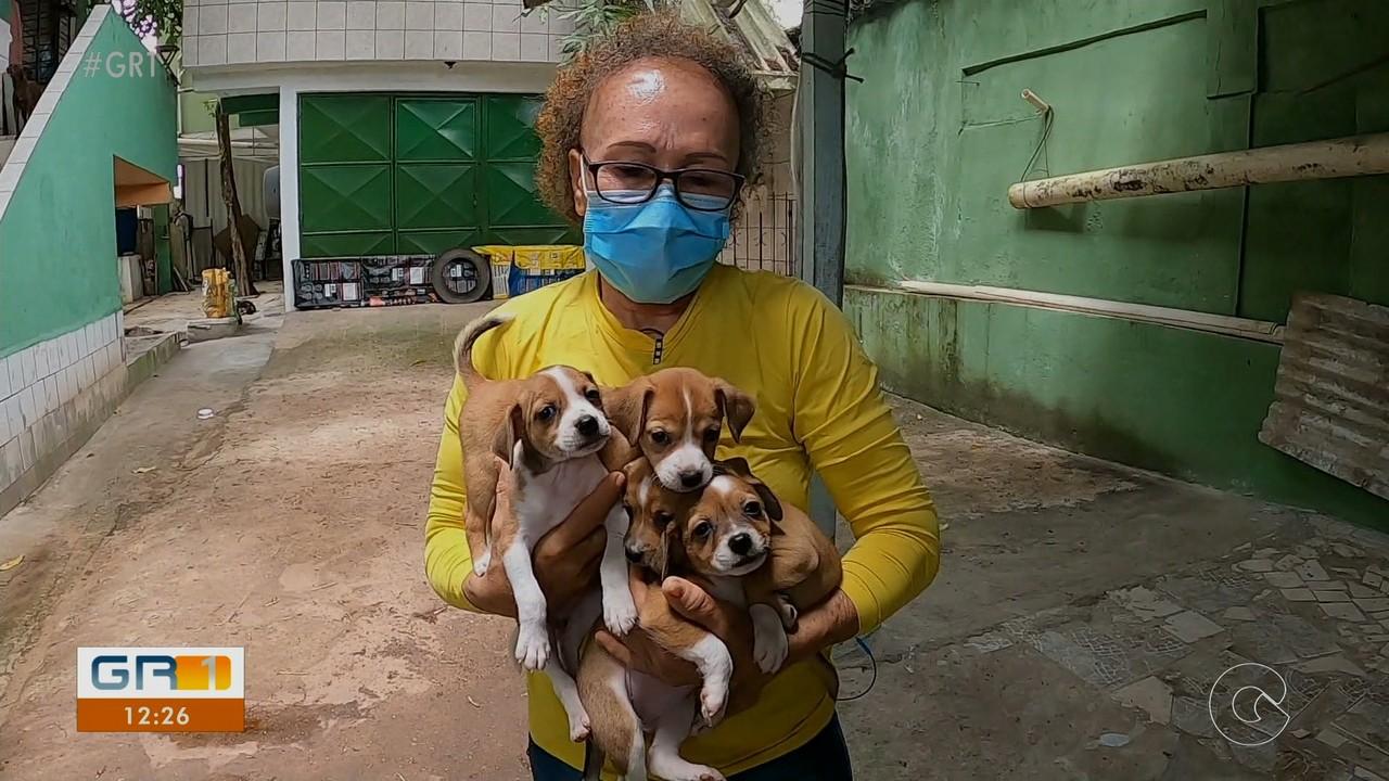 Mulher protetora dos animais tem surpresa ao fazer resgate em Jaboatão dos Guararapes