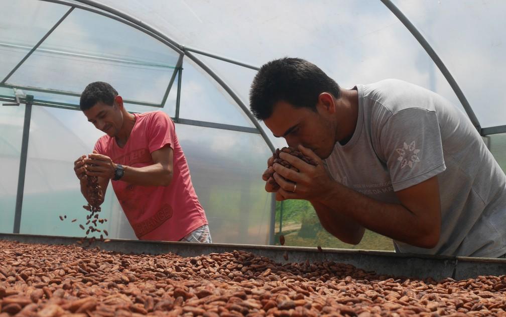 Produtores avaliam qualidade do cacau orgânico em fazenda na Bahia — Foto: Morgann Jezequel/AFP