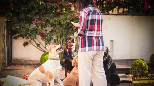 Casa do Equilíbrio Pet oferece ioga e acupuntura para cachorros (Foto: Reprodução/Facebook)