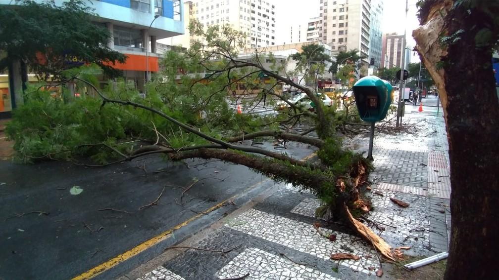 Árvore que caiu no Centro de Curitiba com a chuva desta quinta-feira (30) — Foto: Denilson Beltrame/RPC