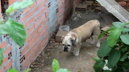 Dezenas de animais vítimas de maus-tratos são encontrados em casa na Zona Oeste de Manaus