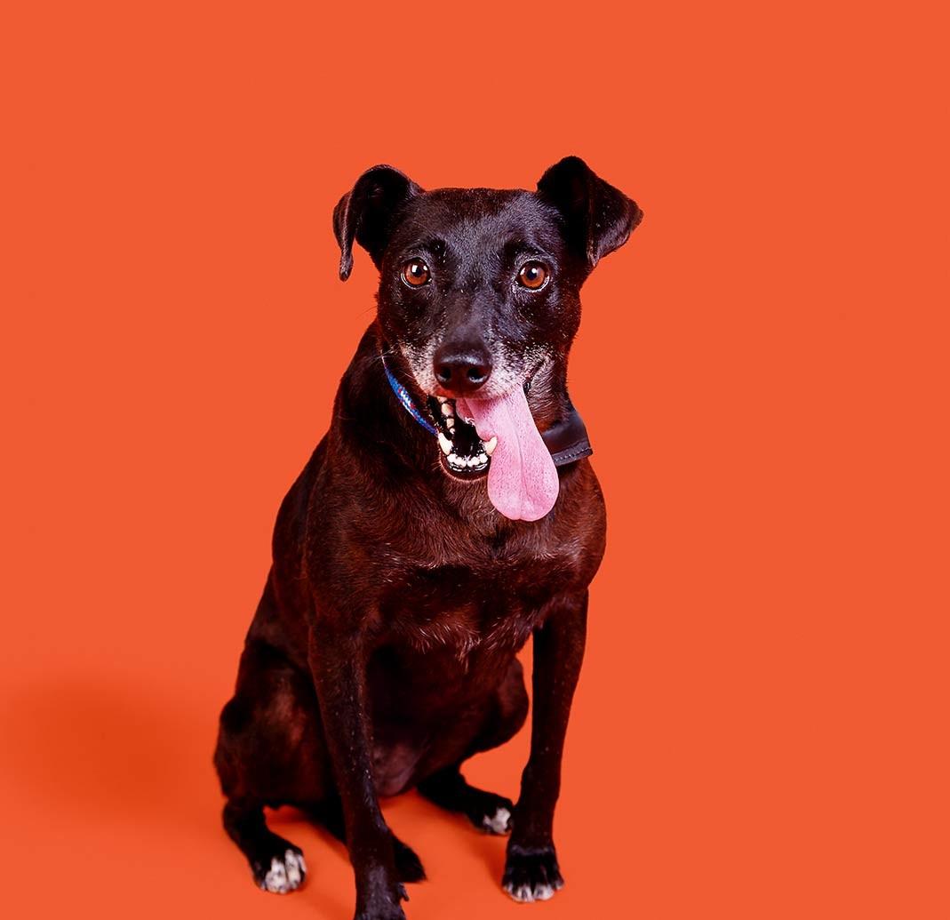 Mais um cão disponível para adoção (Foto: Busca Dogues/ Divulgação)