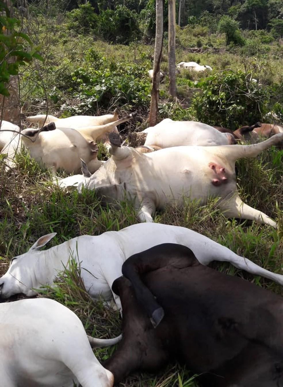 Sitiante encontrou os animais mortes dois dias depois da descarga elétrica — Foto: Cleverson Veronese/Arquivo pessoal