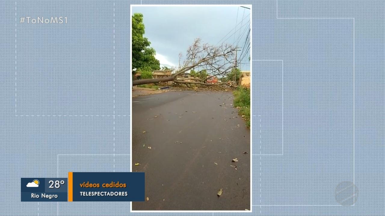Tempestade causa vários estragos em Campo Grande